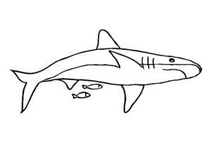 Акула картинки раскраски (45)