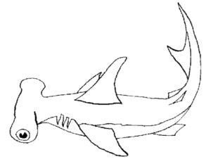 Акула картинки раскраски (46)