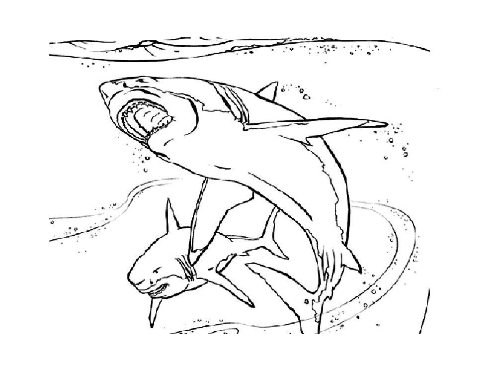 Акула картинки раскраски (47) - Рисовака