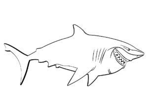 Акула картинки раскраски (49)