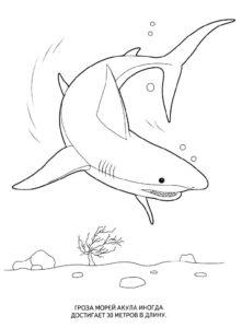 Акула картинки раскраски (52)