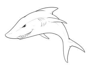 Акула картинки раскраски (6)