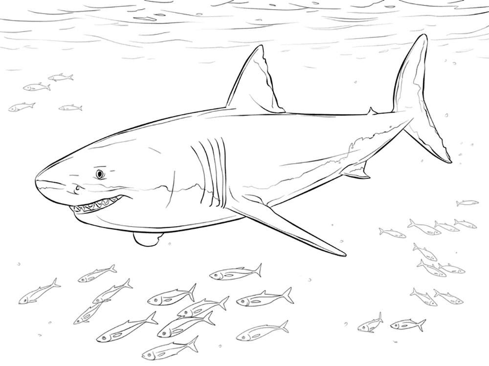 Акула картинки раскраски (8) - Рисовака
