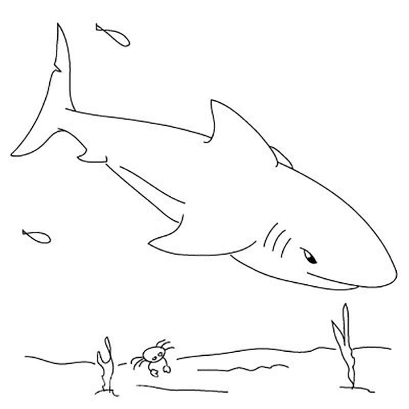 Картинки акулы карандашом