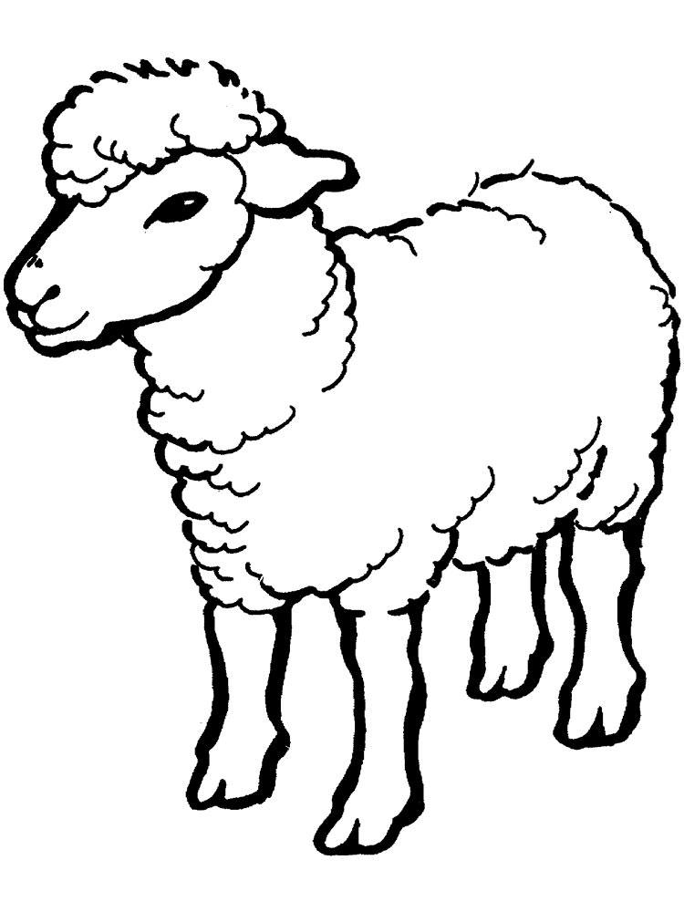 Картинки овечка для детей нарисованные, труда картинки