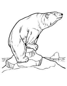 -медведь-картинки-раскраскиБелый-медведь-картинки-раскраски-8-233x300 Белый медведь