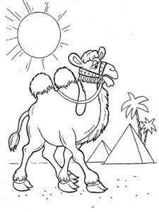Верблюд картинки раскраски (1)