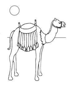Верблюд картинки раскраски (10)