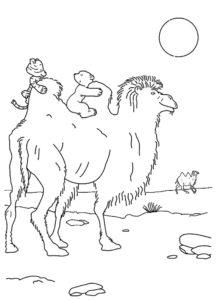 Верблюд картинки раскраски (12)