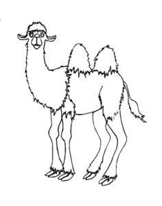 Верблюд картинки раскраски (13)