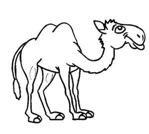 Верблюд картинки раскраски (14)