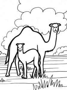 Верблюд картинки раскраски (16)