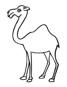 Верблюд картинки раскраски (17)