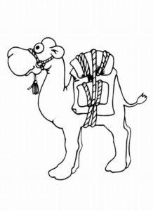 Верблюд картинки раскраски (22)