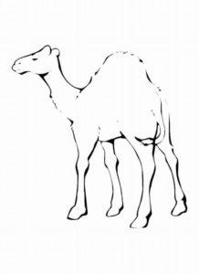 Верблюд картинки раскраски (23)