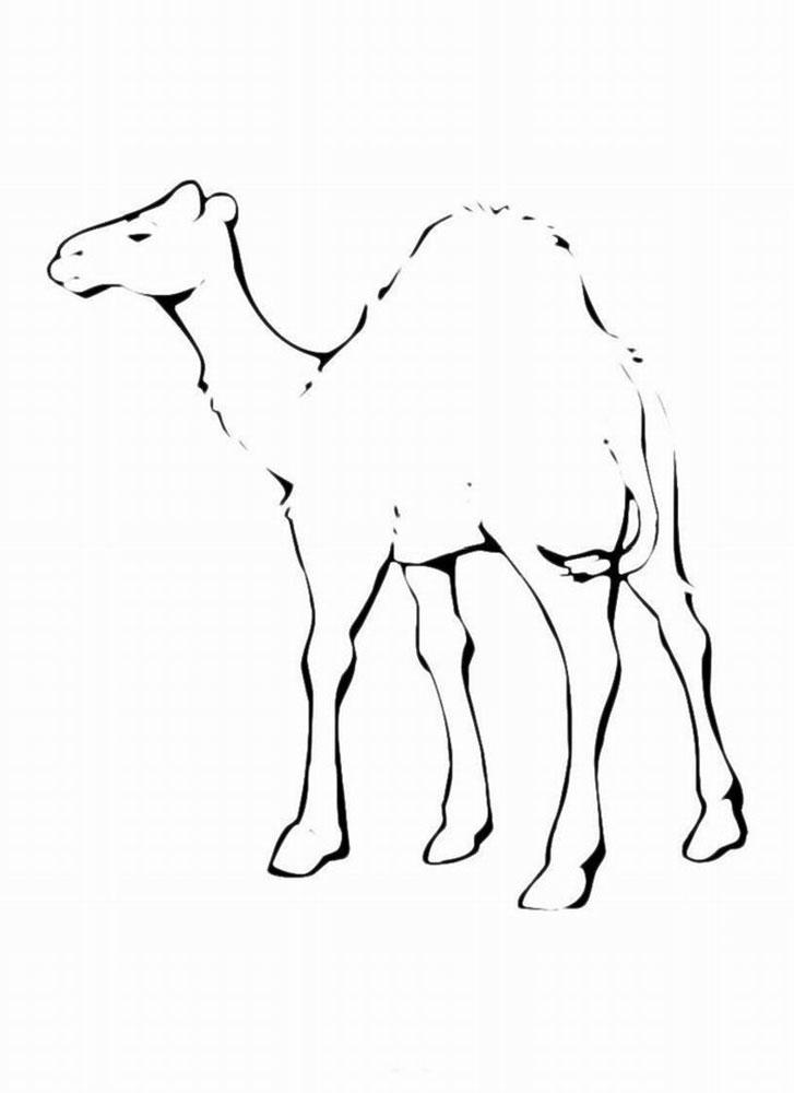Картинки верблюда для срисовки