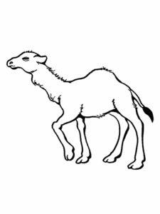 Верблюд картинки раскраски (24)