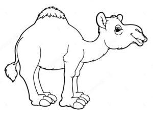 Верблюд картинки раскраски (30)