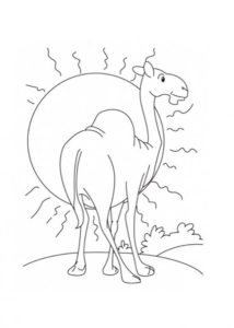 Верблюд картинки раскраски (33)