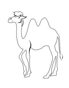 Верблюд картинки раскраски (34)