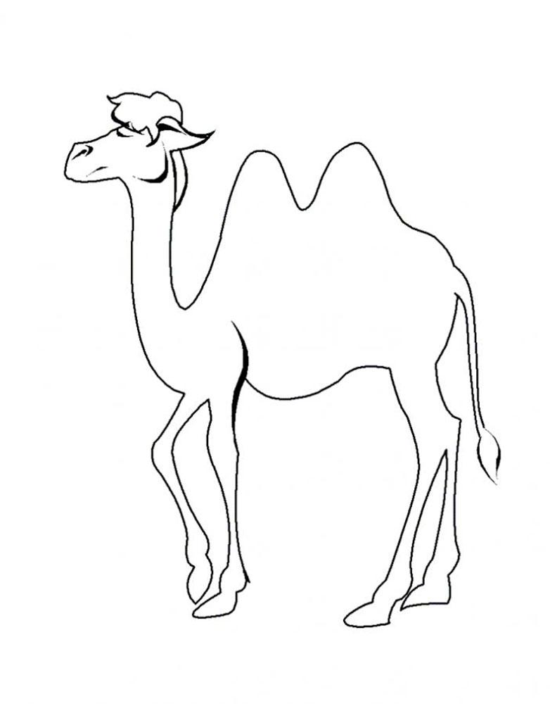 Картинки верблюда для срисовки, летием