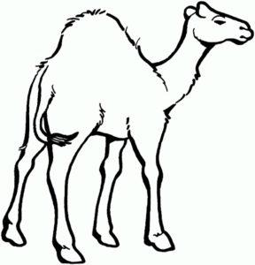 Верблюд картинки раскраски (4)