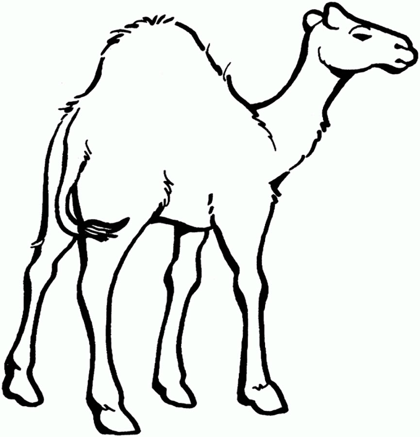 показы, верблюд картинка рисовать еще