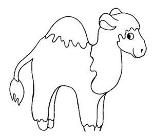 Верблюд картинки раскраски (40)