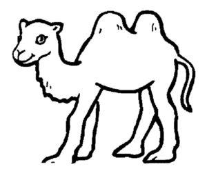 Верблюд картинки раскраски (42)
