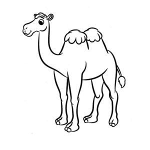 Верблюд картинки раскраски (47)