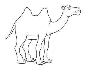 Верблюд картинки раскраски (48)