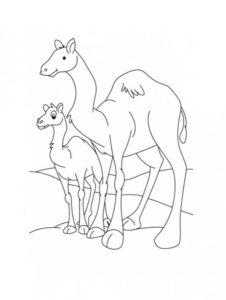 Верблюд картинки раскраски (5)
