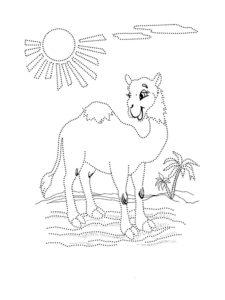 Верблюд картинки раскраски (51)