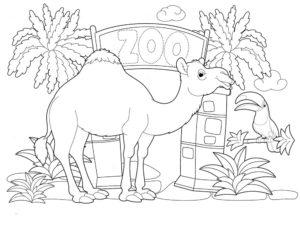 Верблюд картинки раскраски (54)
