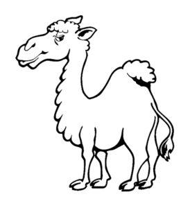 Верблюд картинки раскраски (56)