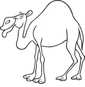 Верблюд картинки раскраски (57)