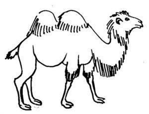 Верблюд картинки раскраски (7)