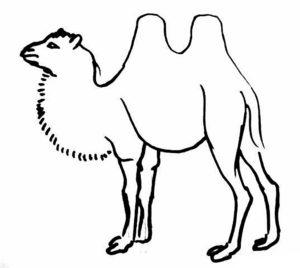 Верблюд картинки раскраски (8)