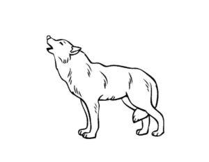 Волк картинки раскраски (7)