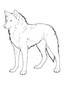 Волк картинки раскраски (8)