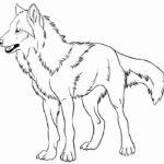 Волк картинки раскраски (9)