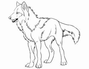 -картинки-раскраски-9-300x233 Волк