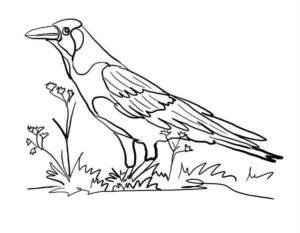 Ворона картинки раскраски (5)