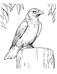 Ворона картинки раскраски (6)