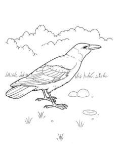 Ворона картинки раскраски (9)