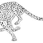 Гепард картинки раскраски (1)
