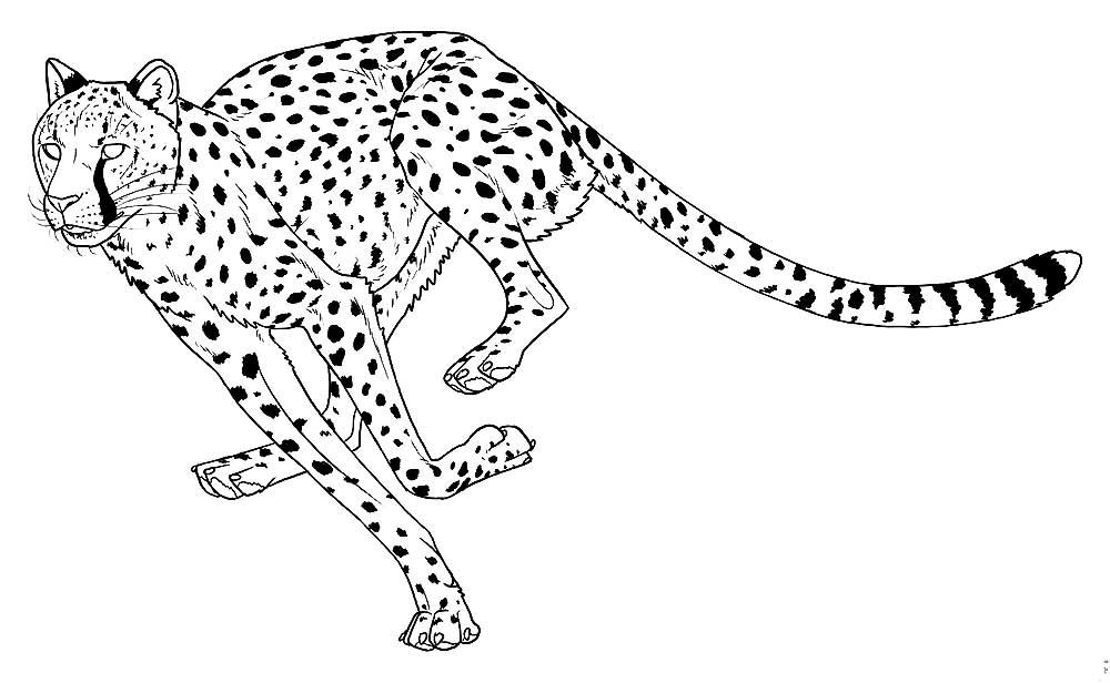 картинки гепарда нарисовать