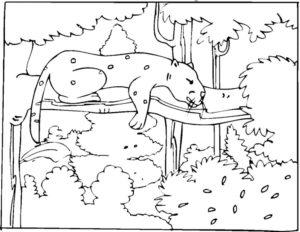 Гепард картинки раскраски (11)