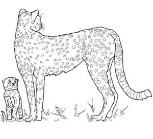 Гепард картинки раскраски (14)