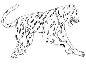 Гепард картинки раскраски (16)